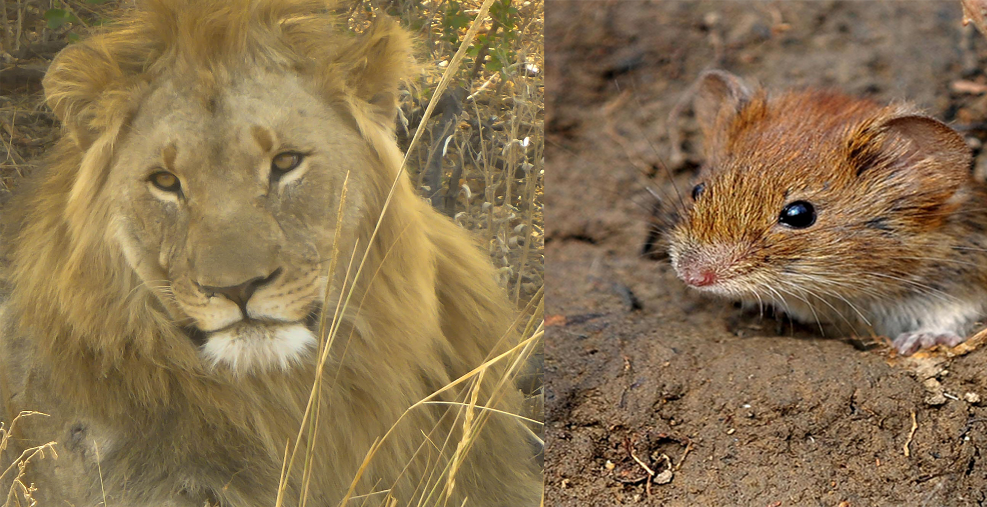 Bist du ein Löwe oder eine Maus? - Selbstbewusst werden