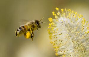 Biene oder Fliege Gedanken prägen unser Leben